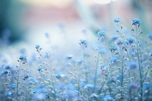 34609251.jpeg青い花